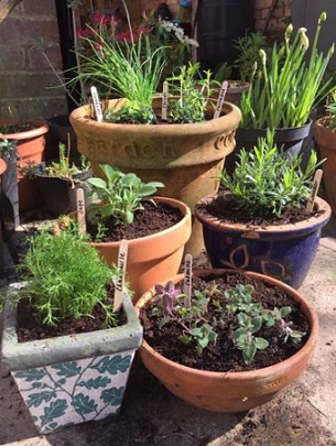 tiny-veg-patch-pots