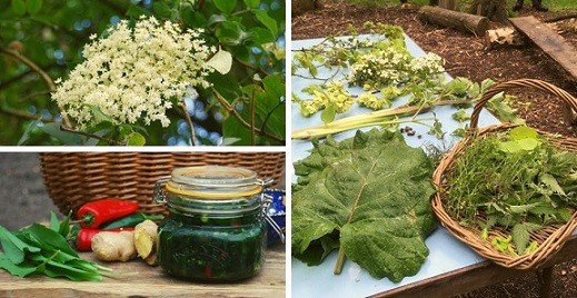 wild-food-and-foraging